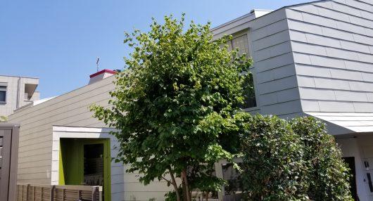 » 【施工実績】 中野区の一戸建て住宅の外壁メンテナンス、シロアリ防蟻処理♫